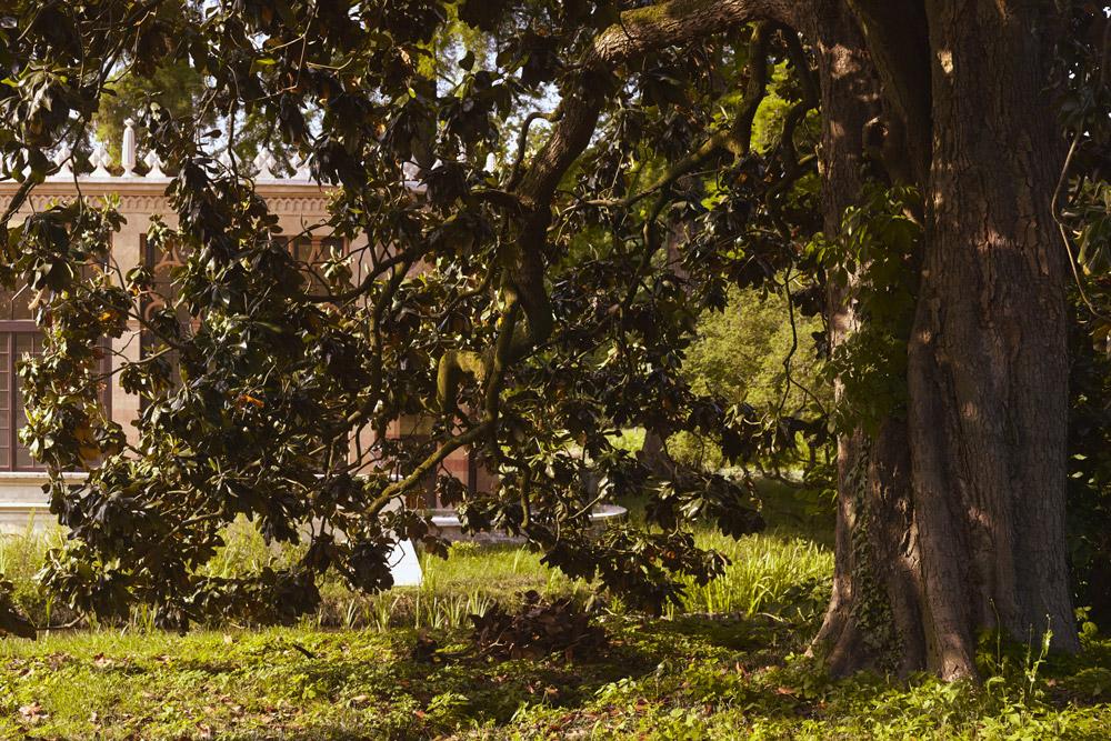 Villa Parco Bolasco - Alberi