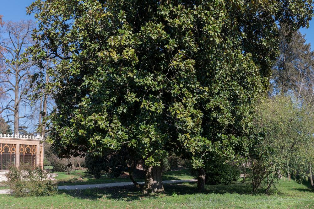 Villa Parco Bolasco - Magnolia